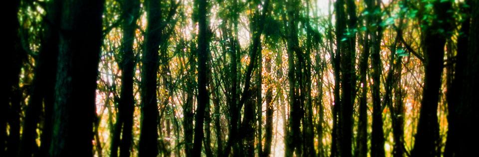 arboles-en-bosque