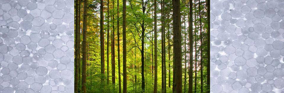 Partículas poliméricas y árboles en un bosque de hojas verdes.